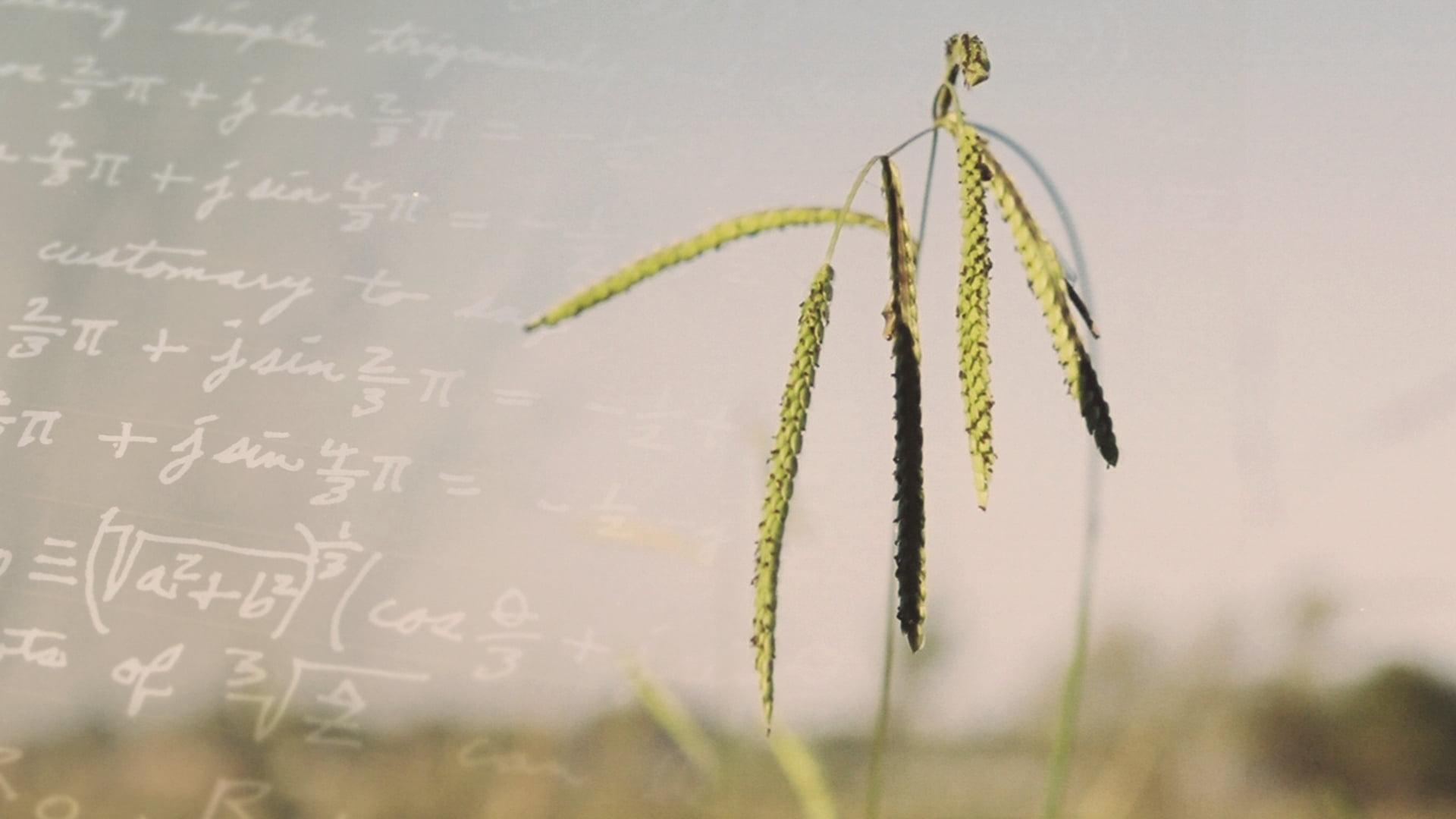 Les formules simples sont-elles un gage d'