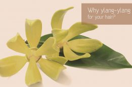Ylang-ylang essential oil for hair