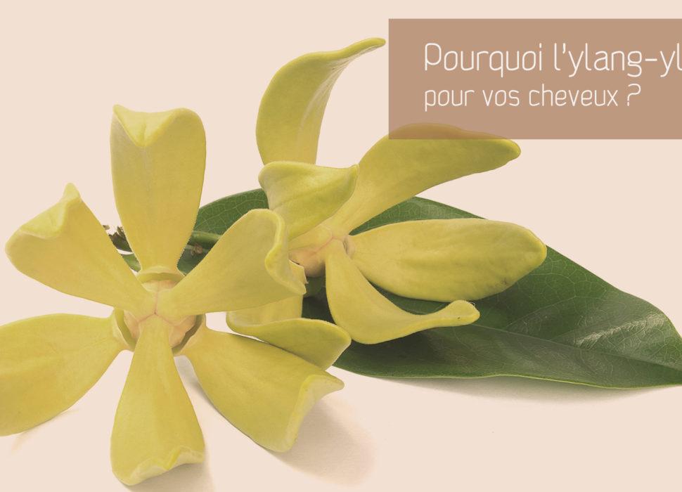 Lhuile essentielle d'ylang-ylang pour les cheveux